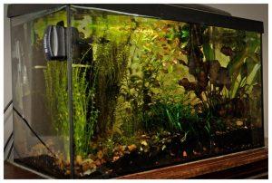 Zadbane akwarium jest wizytówką naszego domu