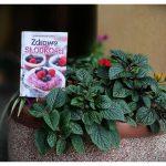 ## Konkurs 2 ## Książka Zdrowe słodkości na każdą porę dnia