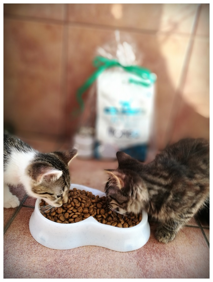 Czym karmić małe kotki