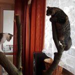 Jak zrobić drapak dla kota? DIY [zdjęcia]