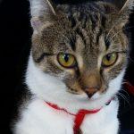 Kocie humorki, czyli jak zwierzęcy behawiorysta uleczył mnie, a nie koty